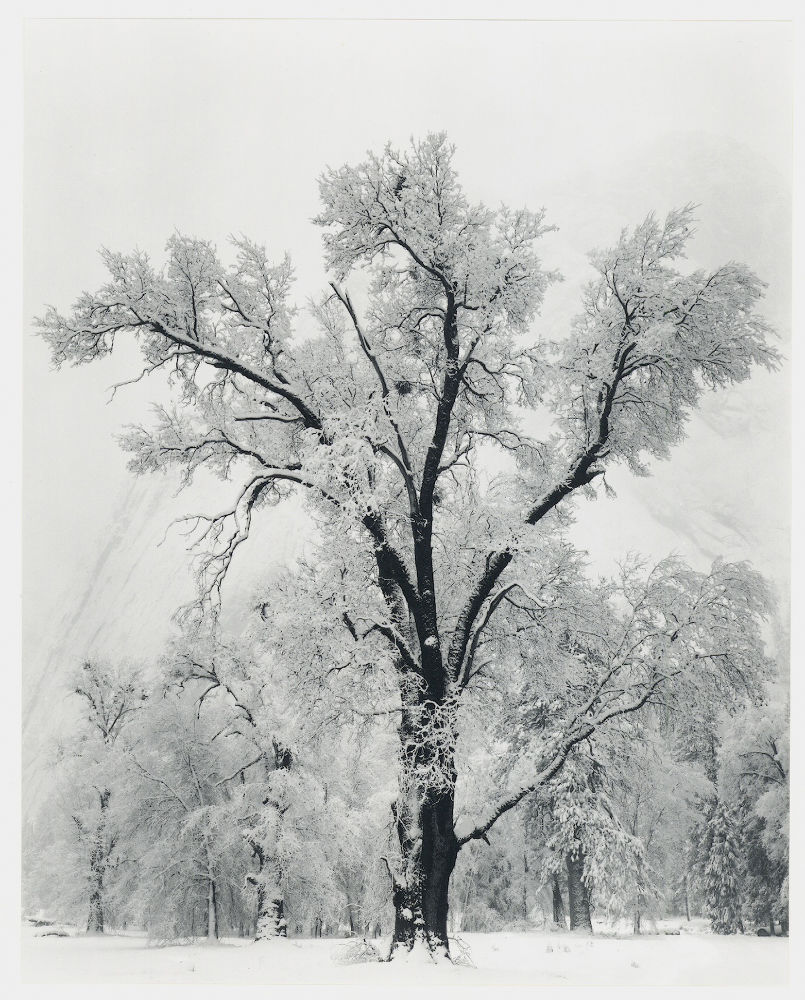 "S-0034, Ansel Adams, ""Oaktree, Snowstorm