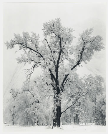 "S-0034, ""Oaktree, Snowstorm