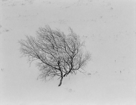 "S-1879, ""frozen tree"""
