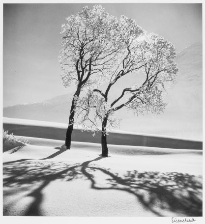 "S-1885, ""Two ice covered trees, near Saint-Mortiz, Switzerland"""