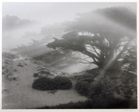 "S-1976, ""Pfeiffer Dune, Big Sur"""