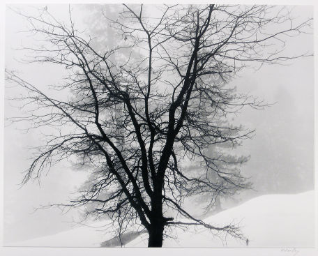 "S-1978, ""Tree in Snow, Sequoia Park"""